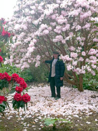 The rhododendrons were out in Taranaki, Photos by Steve Thomson